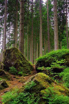 ) Through the Trees