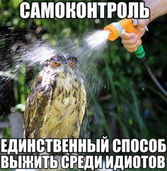 Сова просто космос! | Рупор Петрозаводска