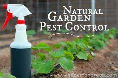 Natural Garden Pest Control - Weed'em & Reap