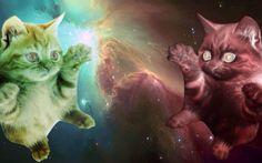 Espacio Cat Wallpapers HD