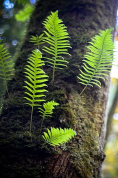 Grow Ferns From Clippings Fern propagation