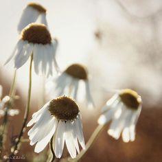 #flowerstalking #ptk_flowers #awesome_florals #kings_flora #paradiseofpetals #topfleur #atramentous_naturae #ig_naturelovers #love_natura #dofnature #photografia_naturamember #nature_sultans #nature_wizards #nature_brilliance #igscandinavia #ourfinland #luontoonfi #rising_perfection #softones_perfection #global_ladies #heart_imprint #bokeh_addicts #photomafia #shotsbyyou #ig_myshot #ig_mood #incredible_shot #princely_shotz
