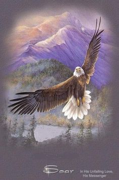 Soaring eagle                                                                                                                                                                                 More
