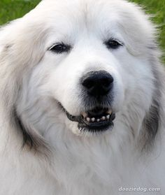 20 Most Lovable Giant Dog Breeds