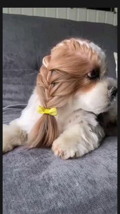 Cute Baby Dogs, Cute Little Puppies, Cute Dogs And Puppies, Cute Little Animals, Cute Funny Animals, Funny Dogs, Cute Cats, Doggies, Cute Animal Videos