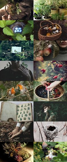 Hedge witch aesthetic mood board