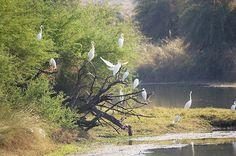 Van-Vihar-National-Park-- tushky