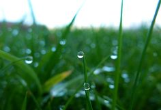 Grass Rain Droplets by Fabien White Framed Prints, Canvas Prints, White Art, Taking Pictures, Grass, Ireland, Nature Photography, Scenery, Artwork