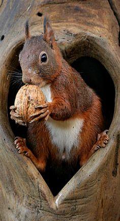 Forest Animals, Nature Animals, Woodland Animals, Animals And Pets, Squirrel Pictures, Animal Pictures, Beautiful Creatures, Animals Beautiful, Cute Baby Animals