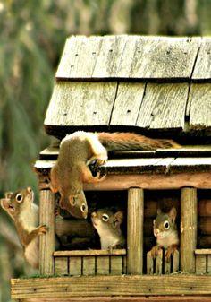 .Livin' the dream...   squirrels.