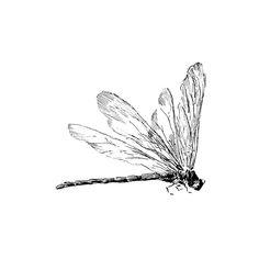 Dragonfly Profile 1323H #tattoosforwomen #TattooIdeasForWomen #TattooIdeasDibujos