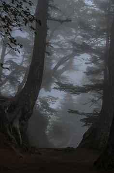 inefekt69:   Misty Forest - Mt Fuji by inefekt69