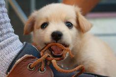 puppy got your shoe