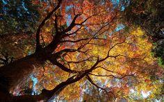otoño y bosques wallpapers - Buscar con Google