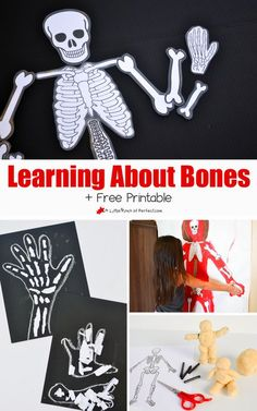 Learning About Bones Activities for Kids and Free Skeleton Printable (Skeleton also makes a fun Halloween decoration)