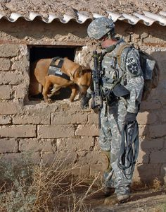 Dogs of war....dogs are vets too.