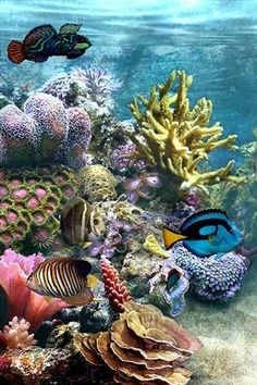 Underwater fantasy.  Gorgeous coral reef.                              …