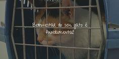 7 dicas queajudam a transportar seu gato com maior conforto para o veterinário