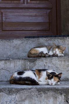 Durmiendo en la escalera