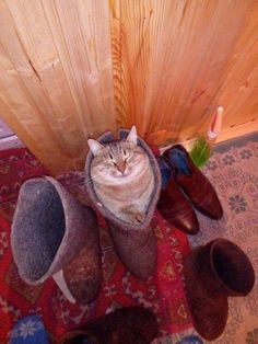 Puss 'N Bootzzzz... Animals And Pets, Funny Animals, Cute Animals, Crazy Cat Lady, Crazy Cats, Cute Cats, Funny Cats, Kinds Of Cats, Beautiful Cat Breeds