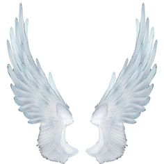 Angel Wings ❤ liked on Polyvore featuring wings