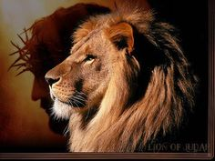 The Lion of the tribe of Judah. Are you ready for His SOON return? ~ karyn