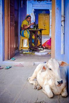 Cow at home, Delhi, India