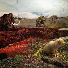 #oddfischlein #tilbagetilistiden  Exhibition about ice age at Natural History Museum, Aarhus in Denmark