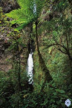 La cascada La Mina, Caldas, se despeña al final de una estrecha cañada poblada de vegetación nativa, Colombia