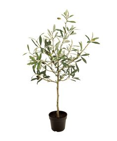 オリーブ エバーグリーン 人工観葉植物 植栽 フェイクグリーン 造花 70cm