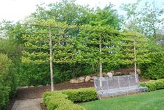 espalier tree fence - to block view from neighbours? Fence Landscaping, Backyard Fences, Garden Fencing, Brick Fence, Front Yard Fence, Low Fence, Fence Stain, Stone Fence, Pallet Fence