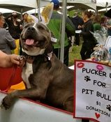 Pit Bull Kissing Booth Will Make You Want To Pucker Up