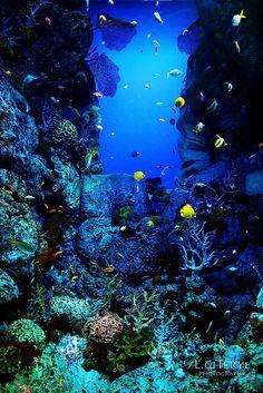 11 awe inspiring shots of life under the sea