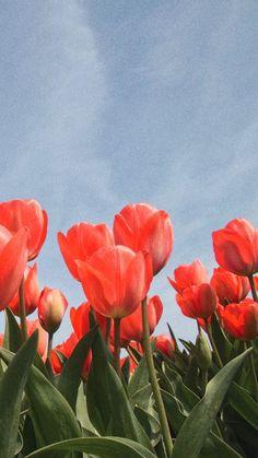 no rain no flowers Cute Wallpaper Backgrounds, Pretty Wallpapers, Flower Wallpaper, Aesthetic Backgrounds, Aesthetic Iphone Wallpaper, Aesthetic Wallpapers, Flowers Nature, Spring Flowers, Photographie Portrait Inspiration