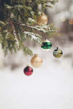 Outdoor ornaments bokeh outdoors winter trees snow holidays christmas ornaments