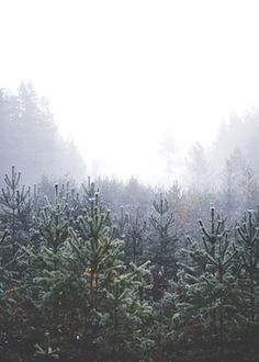 Foggy fir tree forest, photographed in Leksand, Dalarna. Available as poster at printler.com, the marketplace for photo art. Photographer Karl Johansson