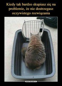 Psycho Test, Wtf Funny, Funny Memes, Funny Lyrics, Polish Memes, Pretty Animals, School Memes, Good Jokes, Smart People