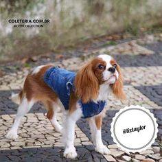 Os filhos de 4 patas não poderiam ficar fora dessa, né?!   #coleteria in the city #citycollection #liztaylor #cavalier #pets www.coleteria.com.br