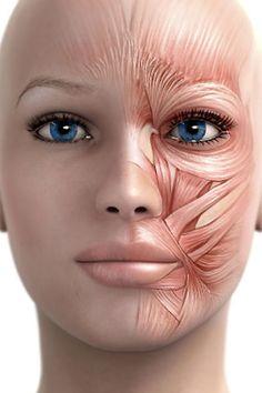 Это специальный комплекс упражнений, разработанный немецким косметологом и пластическим хирургом. На сегодня данный комплекс считается одной из наиболее популярных методик для укрепления лицевых мышц. Интересен тот факт, что...