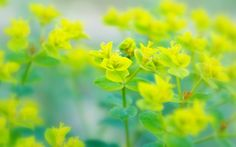 Keywords Yellow Nature Background and Tags