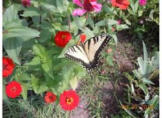 Look what was in My Flower Bed