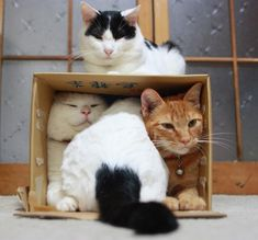 Not enough room for the caboose.....♥ Isn't it funny how much cats love cardboard boxes!