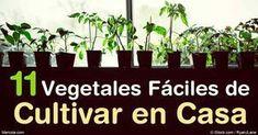 Puede cultivar vegetales en macetas y algunos de los más fáciles de cultivar incluyen los tomates cherry, pepinos, zanahorias, acelga, kale y hierbas. http://articulos.mercola.com/sitios/articulos/archivo/2016/07/09/11-vegetales-faciles-de-cultivar.aspx