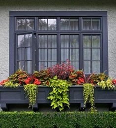 Now this is a window box! Great looking container arrangement from Pot Inc. of begonias, coleus, margarita vine, hakone grass, and creeping jenny. Window Box Flowers, Window Boxes, Flower Boxes, Window Ideas, Container Flowers, Container Plants, Container Gardening, Succulent Containers, Hakone Grass