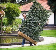 Inovatie! Garduri cu plante gata crescute pe ele. Se monteaza instant!