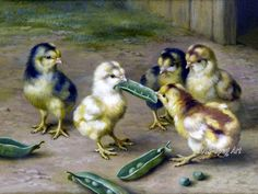 Antique Painting Of Darling Little Chicks In The Barnyard Scrapping Over A Peapod, Digital Art