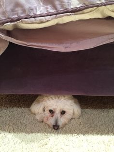 Playing hide and seek from Lola
