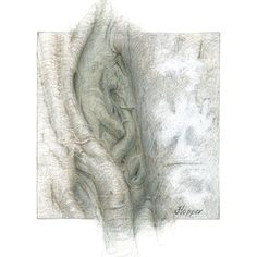 Silver Banyan 1 by Joanne Hopper Silver, Gold and Copper on Prepared Paper ~ 6 x 6 Inches Silverpoint, Monochrome, Gallery, Drawings, Painting, 6 Inches, Copper, Artworks, Gold