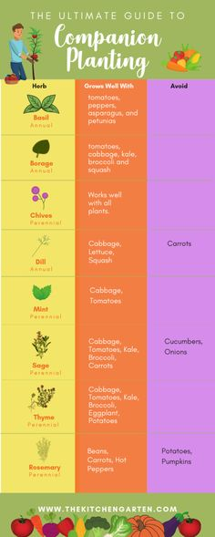 Companion Planting for Vegetables and Herbs can help improve vegetables flavor and keep bugs at bay Gardening for beginners companion planting vegetable garden Vegetable Garden For Beginners, Gardening For Beginners, Gardening Tips, Gardening Scissors, Gardening Services, Gardening Quotes, Container Gardening Vegetables, Planting Vegetables, Vegetable Gardening