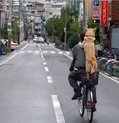 犬だって、貰って来られた時から、親から受けた愛情をちゃんと、全部覚えてる。  =親孝行、したい時に親は居ず= posting @ Bangkok pm2:45
